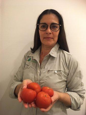 Casafe tomate